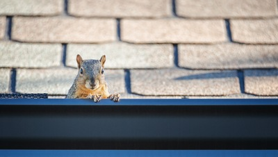 Is It Time to Replace Your Lake County Gutters?